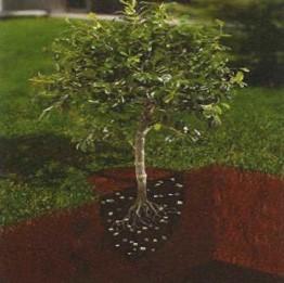 樹木生育条件改善工法